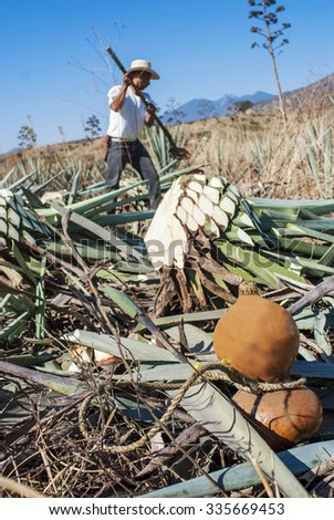 A man work in tequila industry - stock photo
