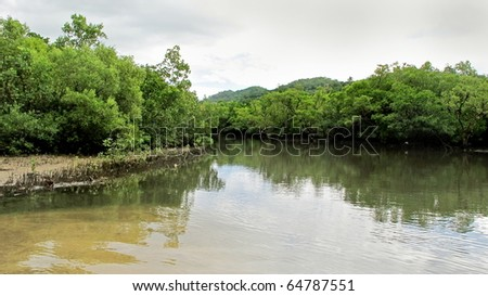A mangrove forest - stock photo