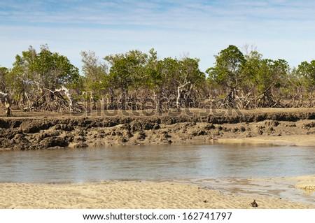 A mangrove forest on the coast, Madagascar - stock photo