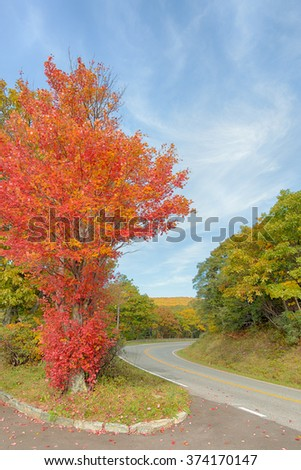 A maple tree showing the first autumn colors on Skyline Drive, in Shenandoah National Park, Virginia. - stock photo