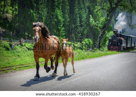 A mare and foal running together in front of a steam locomotive train. Scared, fear, protection, running free, motherhood, future, dynamic, chase, pursuit, horse power, teaching, old and new concepts - stock photo