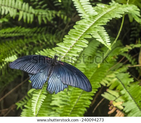 A metallic butterfly perching on a fern. - stock photo