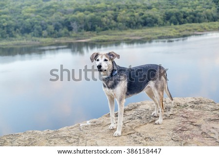 A mixed breed dog standing on the bluff above a river - stock photo
