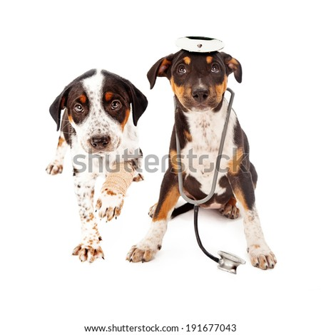 A mixed breed puppy dressed as a veterinarian next to another dog with a broken paw.  - stock photo