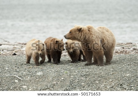 A mother brown bear with her three cubs. - stock photo