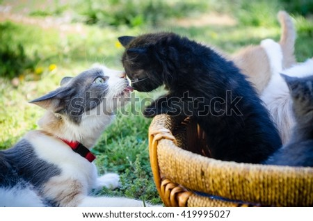 A mother cat care for her black kitten. - stock photo