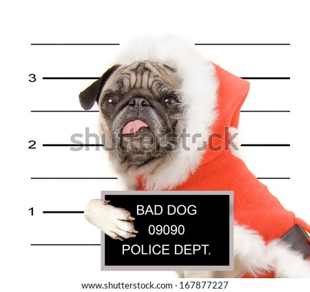 a mugshot of a pug in a santa suit - stock photo