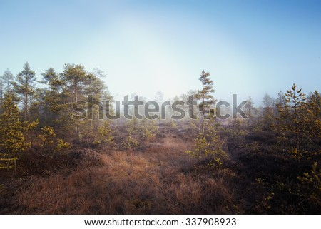 A mystical pine forest. Image taken on a cold morning in Finland during early November. The whole forest in the swamp is covered with fog and frost. Image also has a vintage effect applied. - stock photo