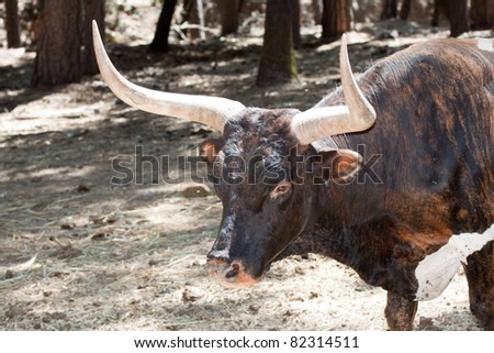 A naturally lit close up of a bull. - stock photo