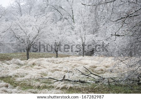 A nature photograph of of the results of an ice storm in rural Tennessee, USA.  There are limbs down in the foreground, tall grass and Dogwood trees white with ice from the freezing rain. - stock photo
