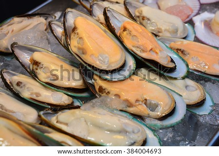 A New Zealand mussels and ice close up - stock photo