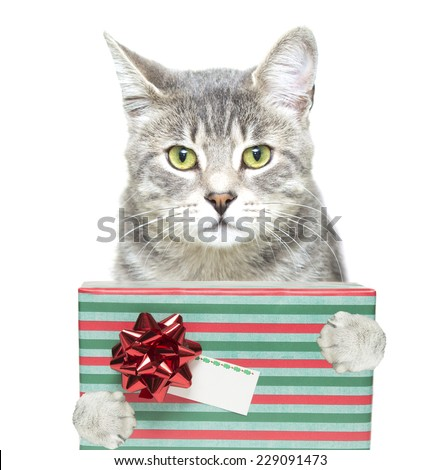 a nice photo of a grey tabby cat with a christmas gift and a gift tag - stock photo