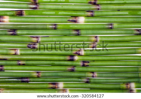 A nice reed mat over a whit - stock photo