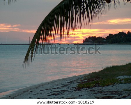 A nice sunset scene looking through a palm branch - stock photo