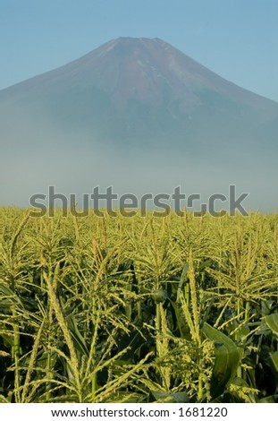 A not so typical view of Mount Fuji with a Midwestern looking corn field in the foreground. - stock photo