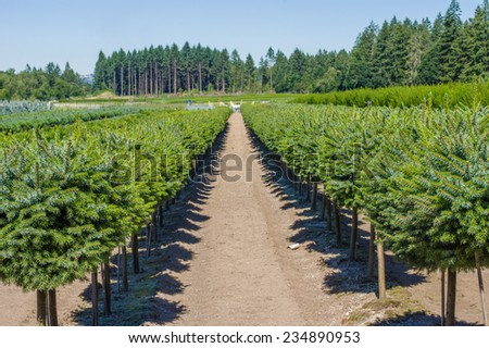 A nursery farm with ornamental shrubs - stock photo