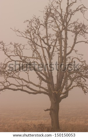 A old tree in the winter in the fog - stock photo