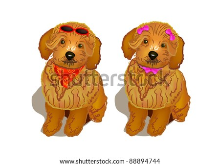 A pair of  brown poodle dogs with modern fashion - stock photo