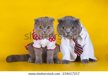 a pair of cats with beautiful dress on a yellow background - stock photo