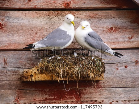 A pair of seagulls is nesting on norwegian house, Norway, Sto - stock photo