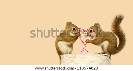 A pair of young squirrels in love holding candy canes in the shape of a heart, and looking happy while perched on a birch log with copy space. Part of a  series. - stock photo