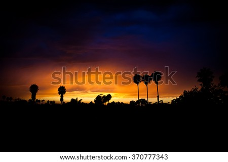 A palm tree silhouette with a fiery orange sunset during a rain storm - stock photo