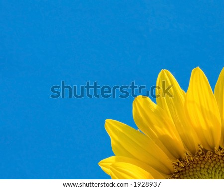 A partial image of a sunflower peaks out of the one corner from a blue background. - stock photo