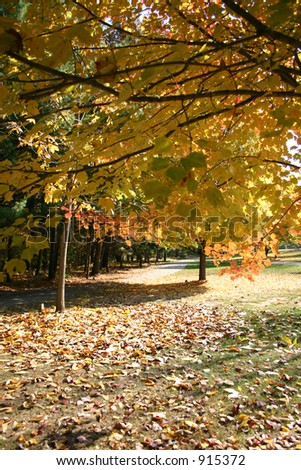 A path in a park in Autumn - stock photo