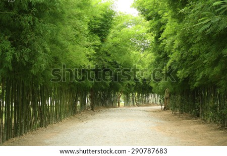 A path is surrounded by bamboo - stock photo