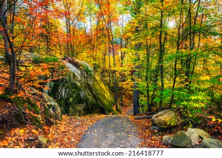 A path through a rocky forested landscape during the day in the autumn season.  - stock photo