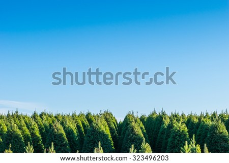 a pattern of Christmas tree garden on day time  - stock photo