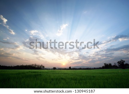 A peaceful rice field on sunrise sky background : Thailand - stock photo