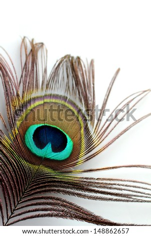 A peacock feather on a white background - stock photo