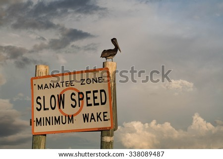 A Pelican Sitting on a Manatee Zone Sign - stock photo