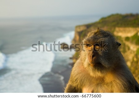 A pensive monkey rests on a cliff perch overlooking waves breaking over a beautiful ocean in Uluwatu, Bali, Indonesia - stock photo