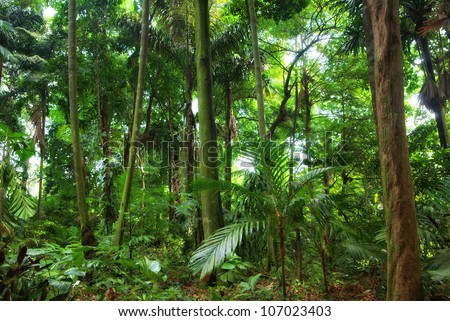 a perfect beautiful rain forest in singapore - stock photo