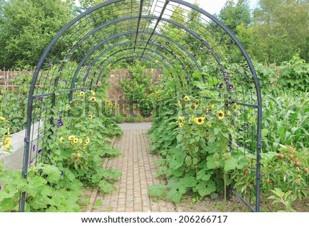 A pergola with sunflowers and apples in a traditional English Country Fruit and Vegetable Garden at Rosemoor, close to Torrington, Devon, England, UK - stock photo