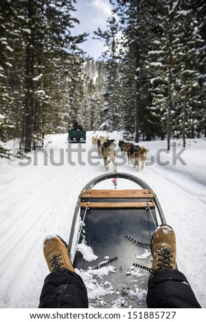 a person being pulled by sled dogs on a snow covered trail - stock photo