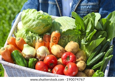A person holding a wicker basket filled with freshly picked vegetables. - stock photo