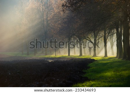 A person walking along a gravel path with the sun rays shining through the misty fog that lingers between a beautiful avenue of trees near a field. - stock photo