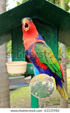 A pet parrot bird - stock photo