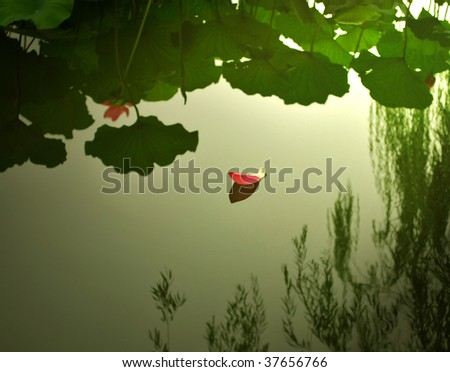 A petal of water lily is floating on the water. - stock photo