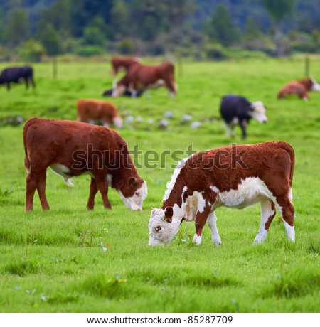 A photo a Red cow and green grass - stock photo