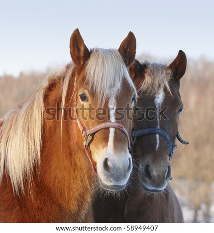 A photo of a beautiful horse - stock photo