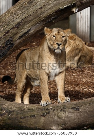 A photo of a lion - stock photo