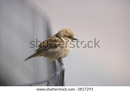 A photo of a sparrow an early, misty morning - stock photo