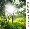 A photo of a Springtime, forest and sunshine - stock photo