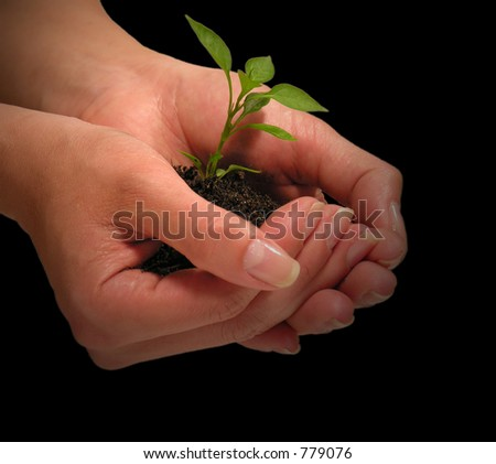 A photo of a woman holding a growing plant - stock photo