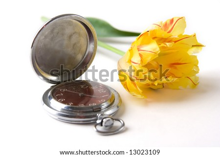a photo of an old watch and yellow tulip - stock photo