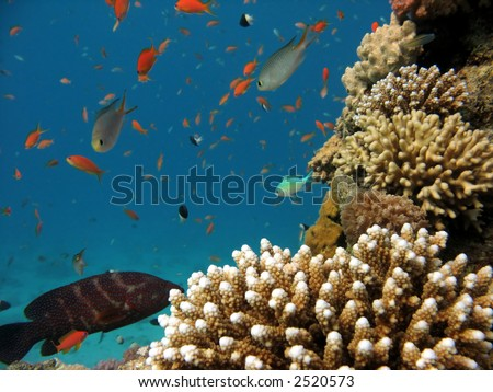 A photo of coral underwater - stock photo
